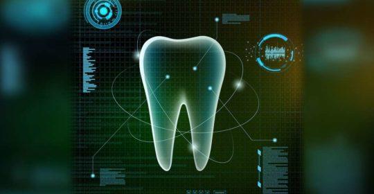 Budowa zęba – co warto wiedzieć jako pacjent